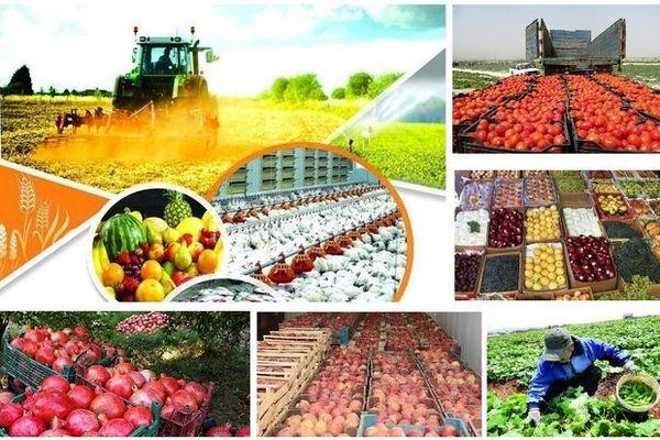 بیش از ۱.۵ میلیون تن محصولات کشاورزی در بوشهر تولید میشود