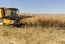 عملیات برداشت گندم و جو در شهرستان شاهرود آغاز شد