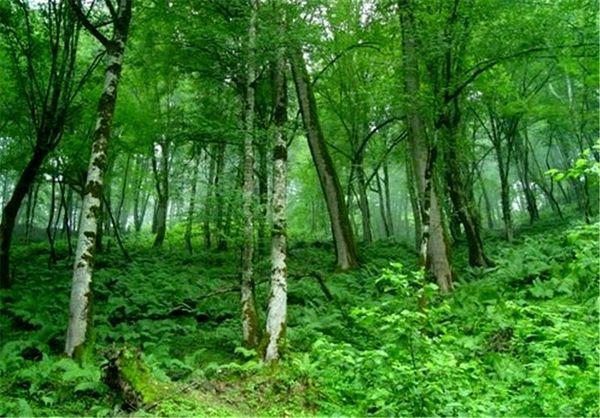 میزان تخریب سالانه جنگلها در ایران یک دهم متوسط جهانی