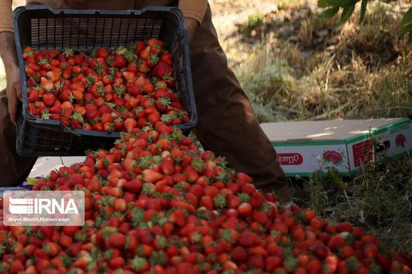 امکان تولید ۲.۷ میلیون تن محصول زراعی و باغی در کردستان فراهم است