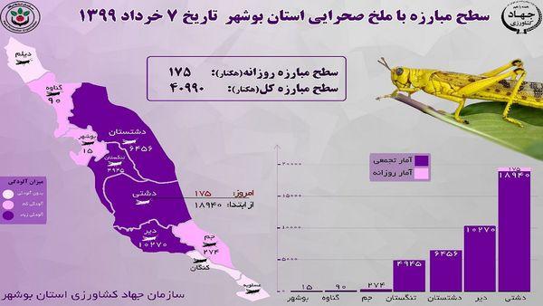 ملخها همچنان در بوشهر هستند