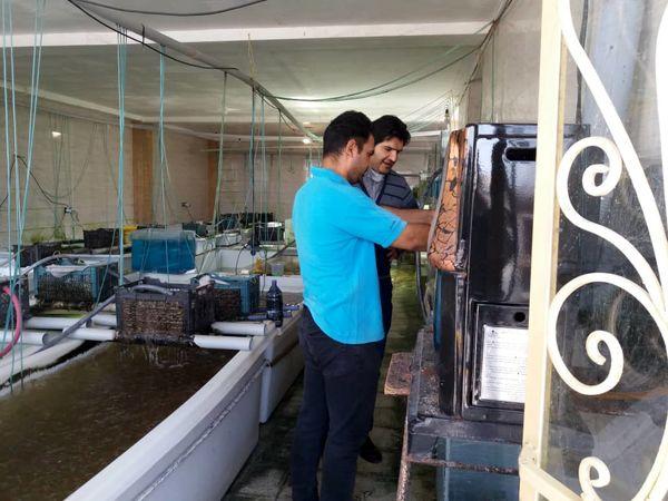 4میلیون قطعه ماهیان زینتی در شهرستان آبیک تولید شد