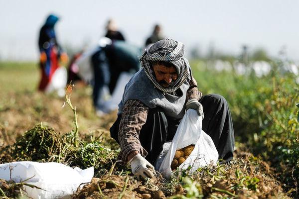 اشتغال جدید در جنوب فارس با تخصیص پایدار آب کشاورزی