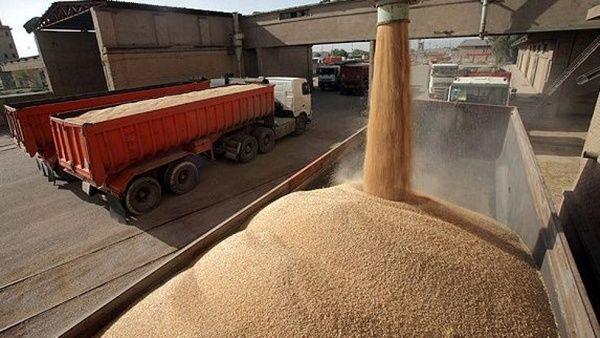 بیش از 1.6 میلیون تن گندم کشاورزان خریداری شد