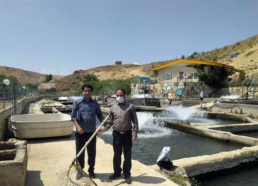 اجرای طرح بازدید و نظارت مستمر فنی بر مزارع پرورش ماهی آذربایجان شرقی