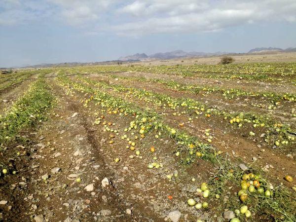 خسارت ٢٠٠ میلیاردی بارش تگرگ به بخش کشاورزی شهرستان فنوج