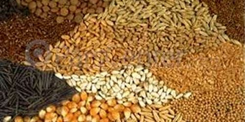 بسیج کشاورزی افزایش بهره وری را دنبال می کند