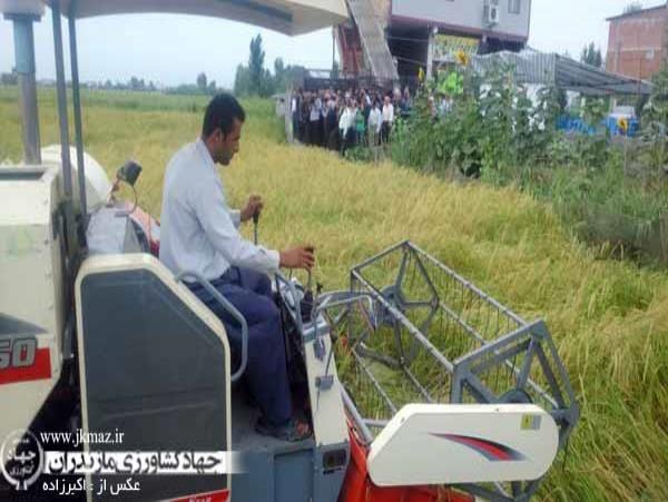 برداشت مکانیزه برنج در 210 هزار هکتار شالیزار مازندران