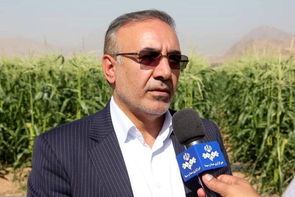 تجهیز ۵۱ هزار هکتار از اراضی کشاورزی استان به سیستم آبیاری نوین