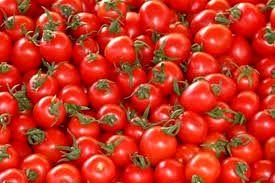 بذر گوجه فرنگی با یارانه دولتی در خرامه توزیع شد