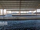 احداث 220 واحد پرورش ماهی در استان ایلام