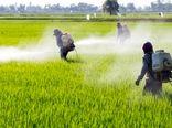 مبارزه شیمیایی با علفهای هرز گندم پاییزه در 24 هزار هکتار از اراضی کشاورزی