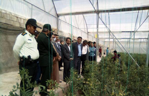 بهره برداری پروژه گلخانه سبزی وصیفی در مجتمع گلخانه ای شهرستان درمیان