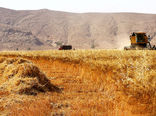 خرید  7.7 میلیون تن گندم مازاد بر نیاز کشاورزان