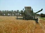 19 هزارتن گندم تحویل دولت شد