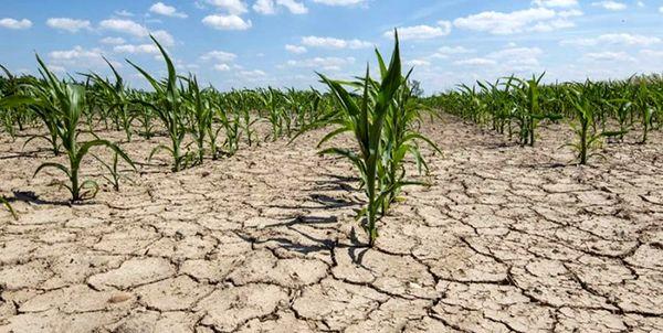خسارت ۸ هزار و ۵۰۰ میلیارد ریالی خشکسالی به کشاورزی استان ایلام