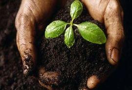 خاک سالم؛ اساس ترقی و پیشرفت جامعه