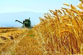 اختصاص بیش از ۳۳ درصد سهم اشتغال در استان زنجان به بخش کشاورزی