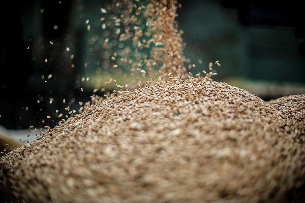 نیازمند واردات بذر هستیم