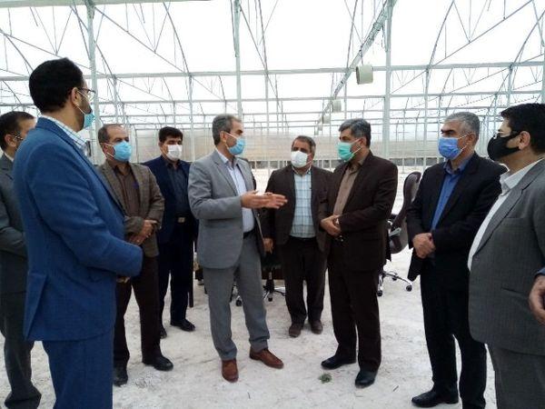 روسیه و آسیای میانه بازار هدف محصولات گلخانه ای ایران
