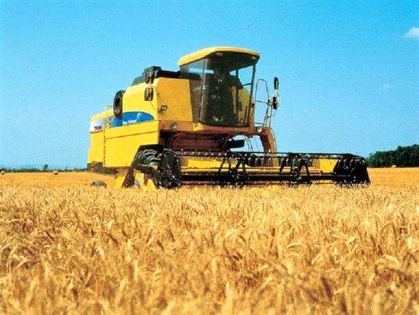 تاکنون بیش از 107 هزار تن گندم از کشاورزان استان بوشهر خریداری شده است