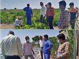 بررسی مشکلات و چالشهای سیستمهای آبیاری تحت فشار در نشست یاوران تولید تاکستان