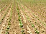 اختصاص 2 هزار هکتار از اراضی کشاورزی چهارمحال و بختیاری به کشت چغندرقند
