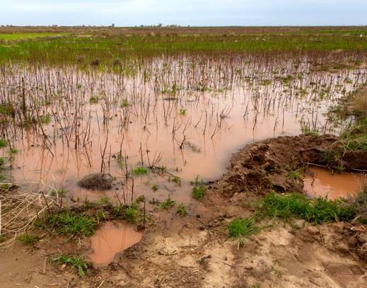 بارندگی اخیر بیش از ۷۳ میلیارد ریال به کشاورزی خراسان شمالی خسارت زد