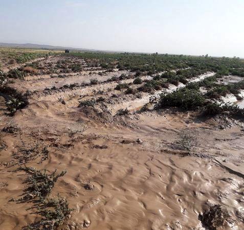 خسارت بیش از ۲۴ میلیارد ریالی سیل به کشتزارهای مانهوسملقان