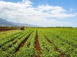 تراز تجاری بخش کشاورزی 4 میلیارد دلار بهبود یافت
