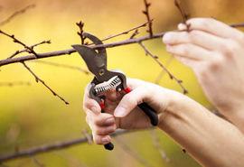 عملیات هرس زمستانه باغات شهرستان سامان انجام شد