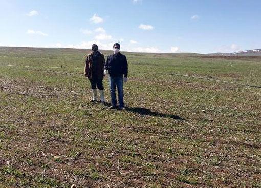 مزارع گندم و کلزای آذربایجان شرقی در وضعیت رضایت بخش قرار دارند