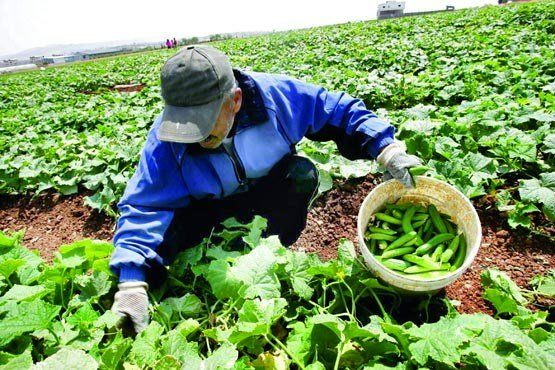 پیوستن به WTO کشاورزی را رونق میبخشد؟