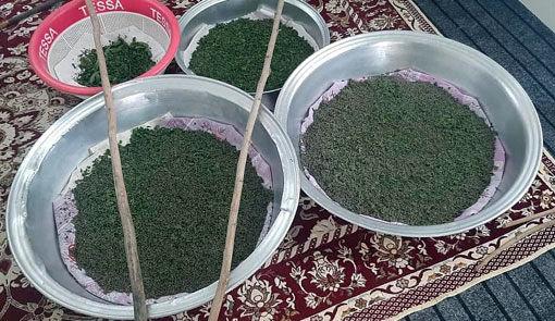 توزیع 28 جعبه تخم نوغان در شهرستان خداآفرین