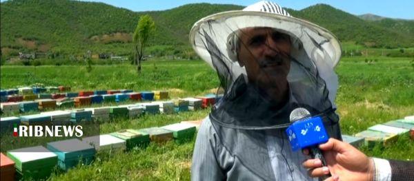 تولید بیش از ۲۰۰ تن عسل در مریوان