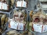 اجرای طرح بسته بندی آلایش خوراکی دام در کشتارگاه صنعتی بهین گوشت حلال اروند