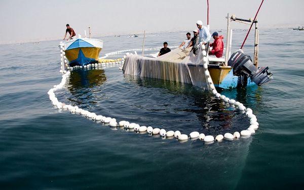 رفع ممنوعیت صید برخی گونه های آبزی در استان هرمزگان