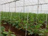 آغاز بهرهبرداری از اولین گلخانه کوچکمقیاس شهرستان رابر