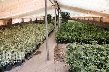 گلخانه صادراتی محلات