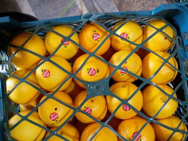 داراب رتبه اول تولید پرتقال فارس دارد