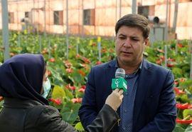 ۴۳ پروژه شهرکهای کشاورزی در دهه فجر به بهرهبرداری میرسد