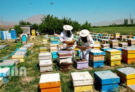 پیشنهاد بیمه تامین اجتماعی زنبورداران درانتظار تصویب در لایحه بودجه سال آینده