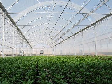 بقای کشاورزی در گرو توسعه کشت های گلخانه ای