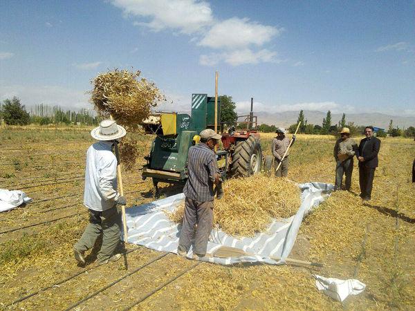 خوزستان، همچنان قطب کشاورزی ایران است