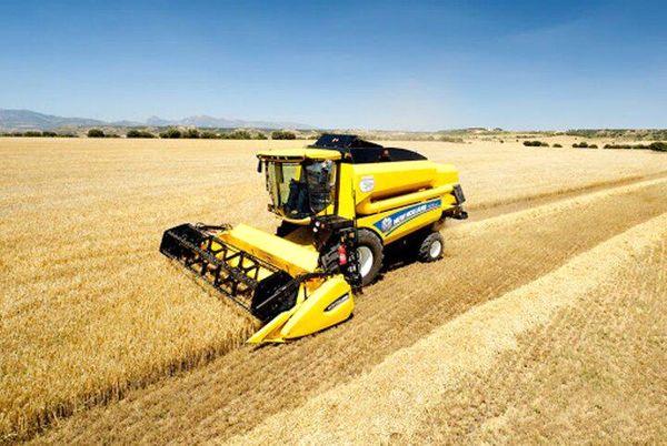 ۶ هزار تن گندم از مزارع شهرستان بن برداشت شد