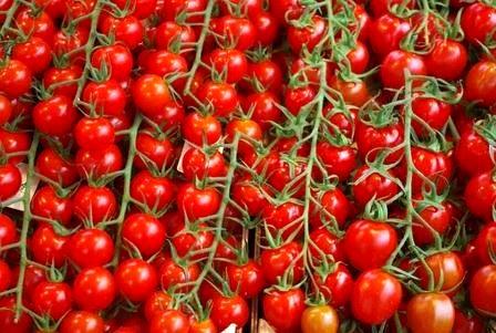 تولید بیش از 6 هزار تن گوجه فرنگی در رستم