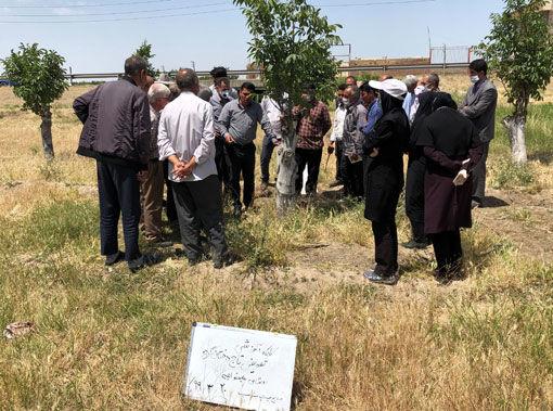 برگزاری کارگاه آموزشی تعویض تاج درختان گردو در شهرستان بناب