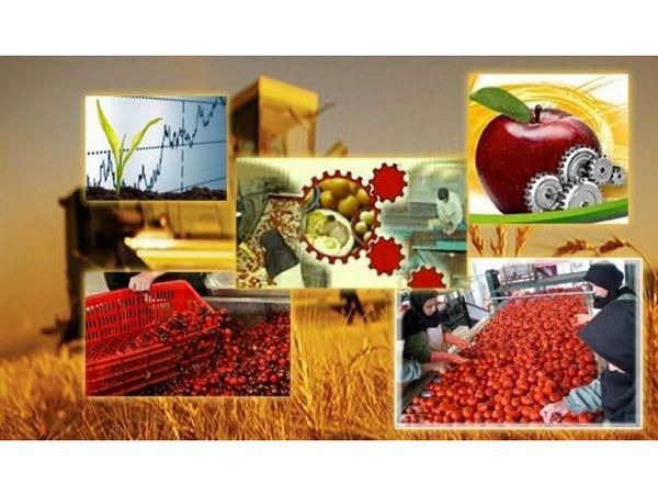 24 فقره جواز تاسیس صنایع کشاورزی در سیمرغ صادر شد
