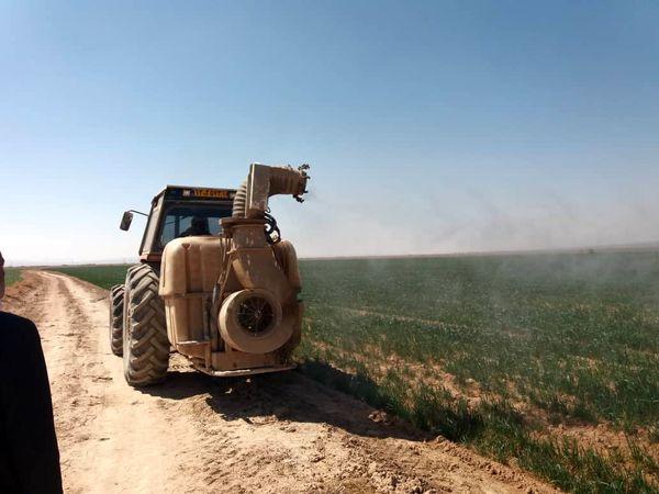مبارزه با سن غلات در هزار و 225 هکتار از اراضی خراسان شمالی