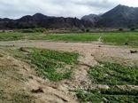 پرداخت بیش 359 میلیارد ریال به کشاورزان سیلزده سیستان وبلوچستان